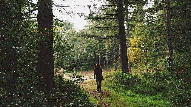 Spacer po lesie - jakie korzyści dla zdrowia?