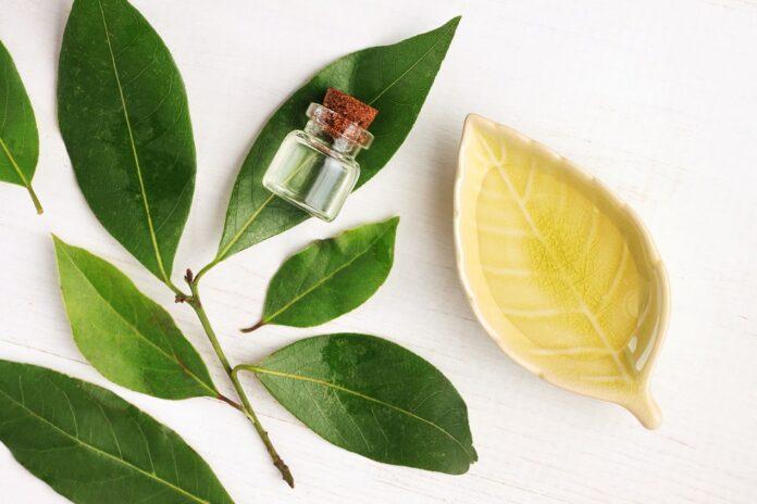 Olejek kamforowy w medycynie i kosmetyce