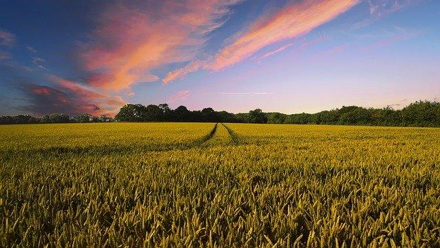 Ile wynosi podatek od sprzedaży ziemi rolnej?