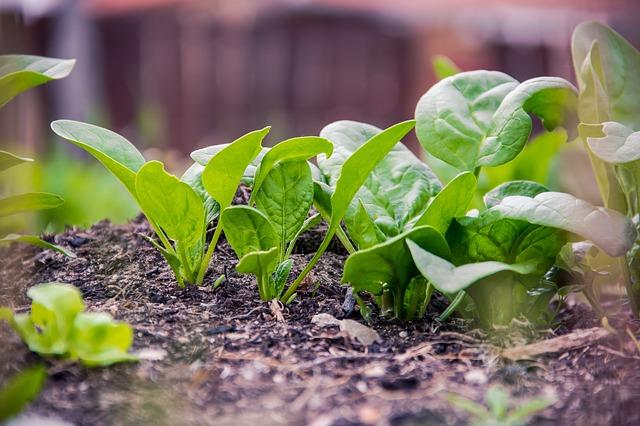 Jakie warzywa sadzimy we wrześniu?